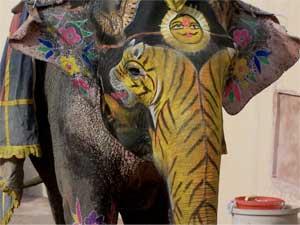 India_elephant_300